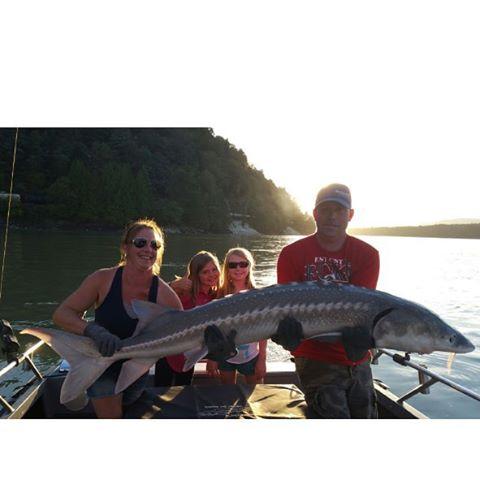 Five foot sturgeon fishingthefraser haveyoulostyoursturginity ilovesturgeon auguststurgeon